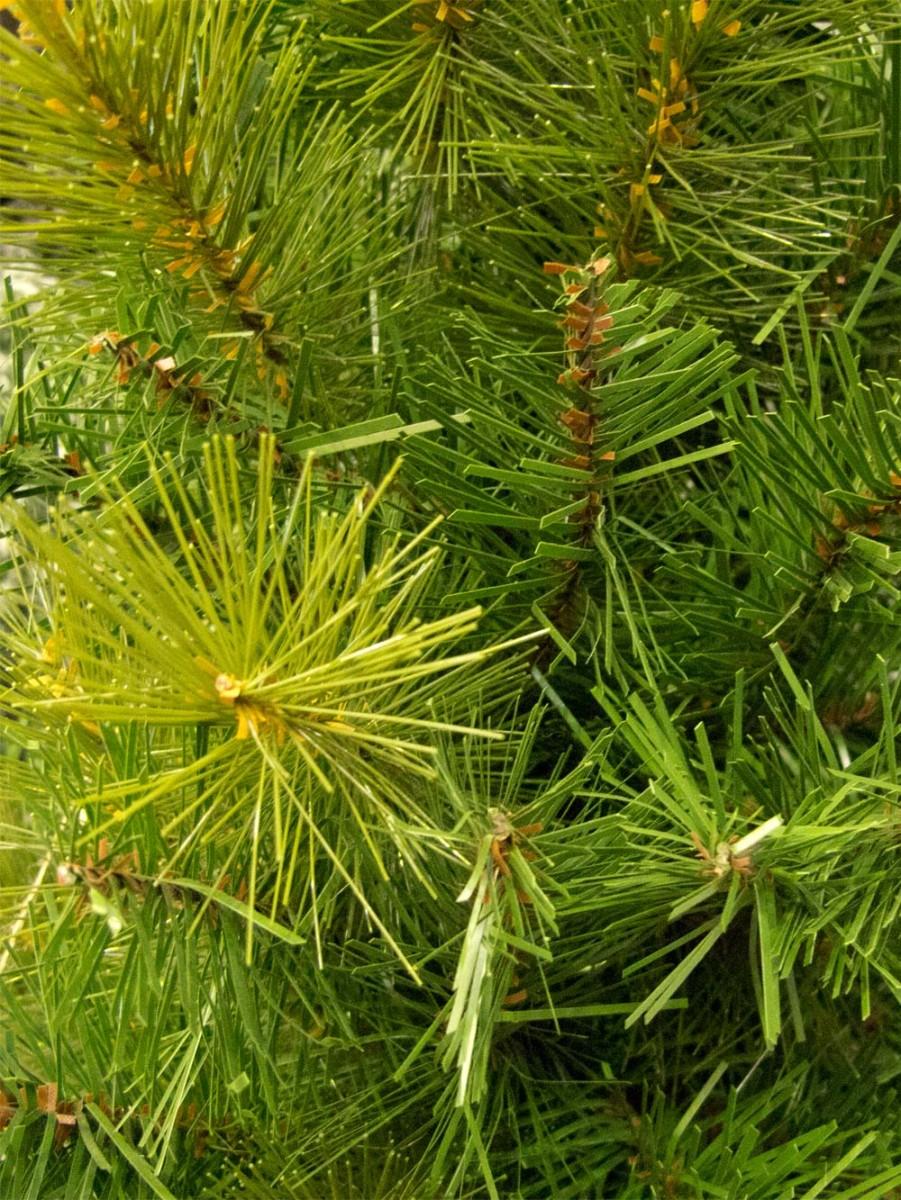 Balsam Pine Table Top Tree 65cm Christmas Trees The